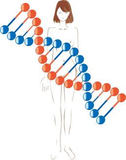 効果的・効率的にキレイになれる DNA検査